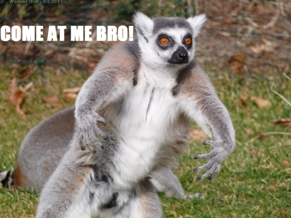 Come at me bro Lemur