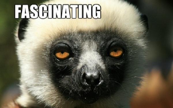 FASCINATING lemur