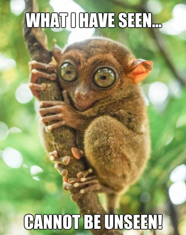 TARSIER what i have seen cannot be unseen